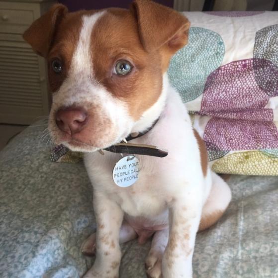 critter bling custom pet tag