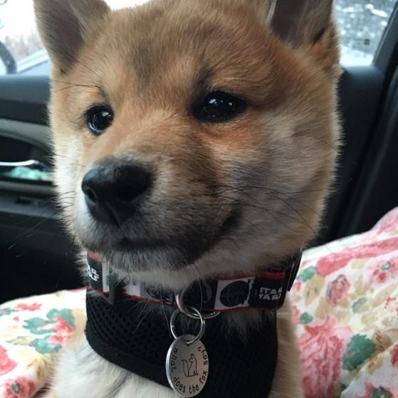 critter bling fox tag
