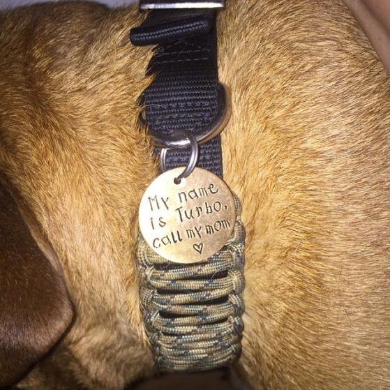 critter bling dog ID