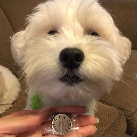 critter bling tennis ball tag